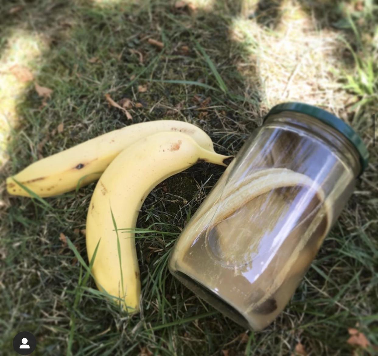 purin de banane